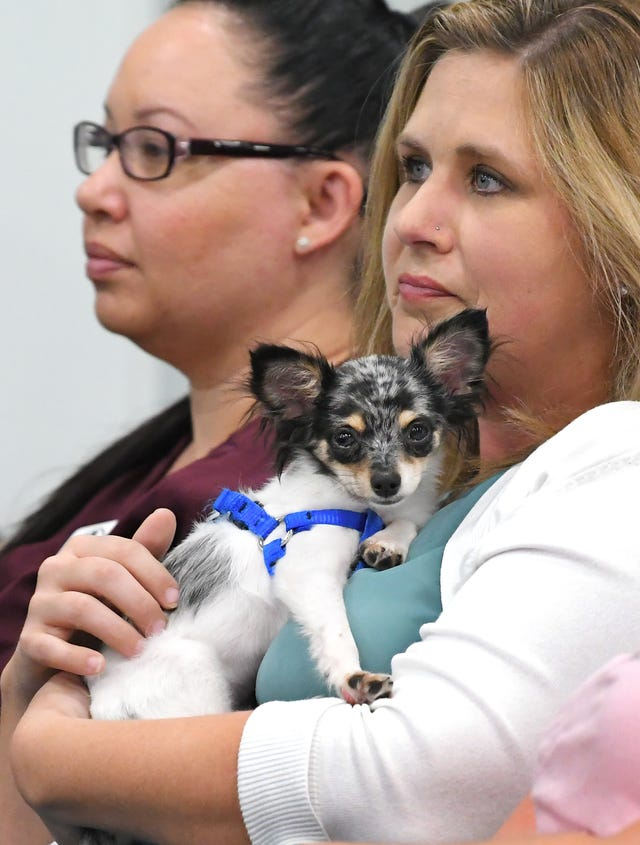 To stop puppy mills, we will need more than ordinances in Florida