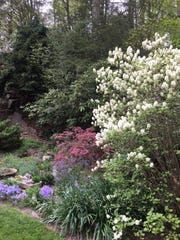 Woodland Walkers enjoy the beauty of Leonard J. Buck Garden in spring. Walks take place at 2 p.m. Sundays in April and May.