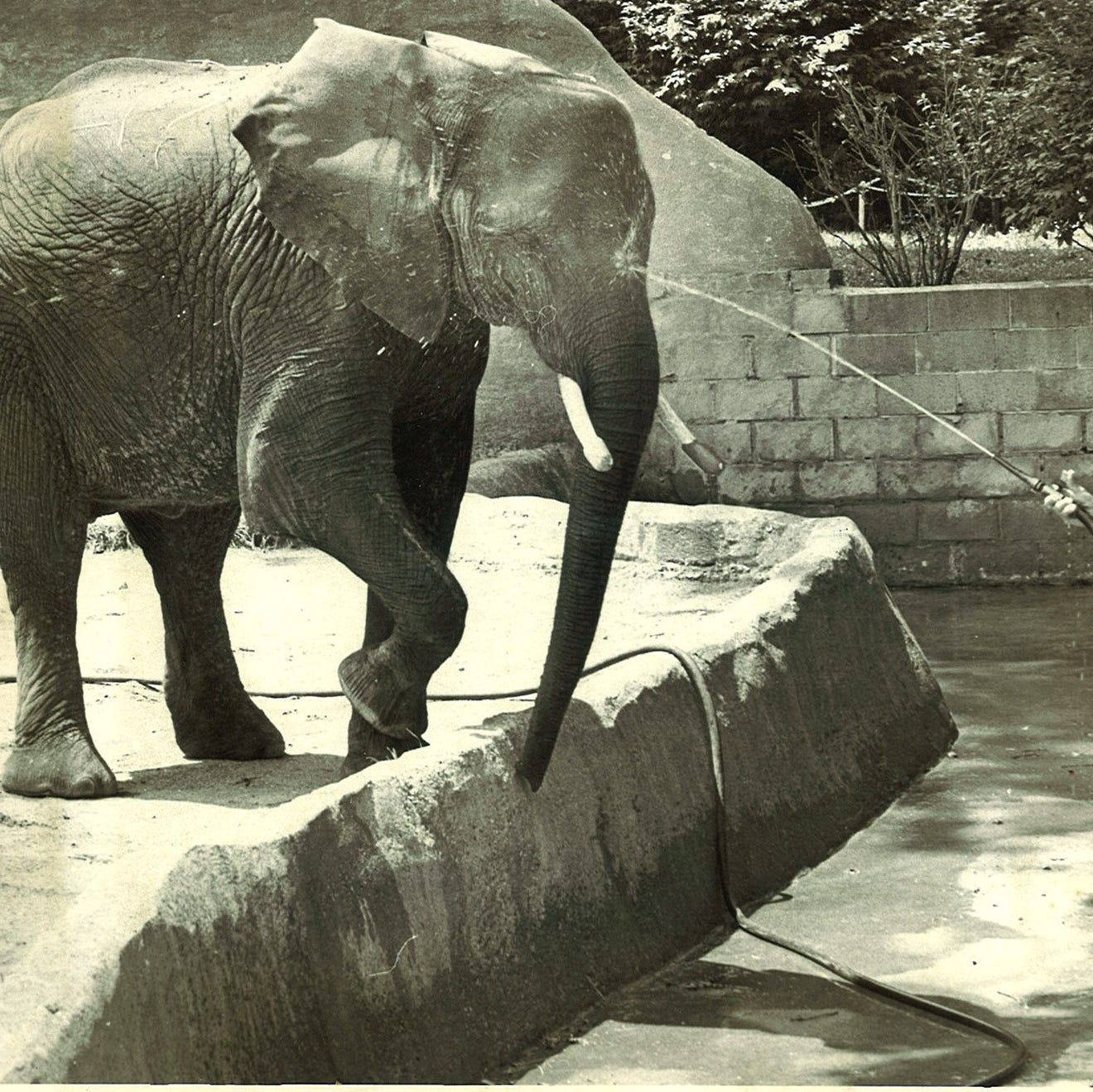 Indianapolis Zoo elephant deaths: Tombi appears safe for now, spokesperson says