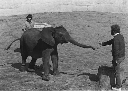 Tombi the elephant at Lansing's Potter Park Zoo in 1980.