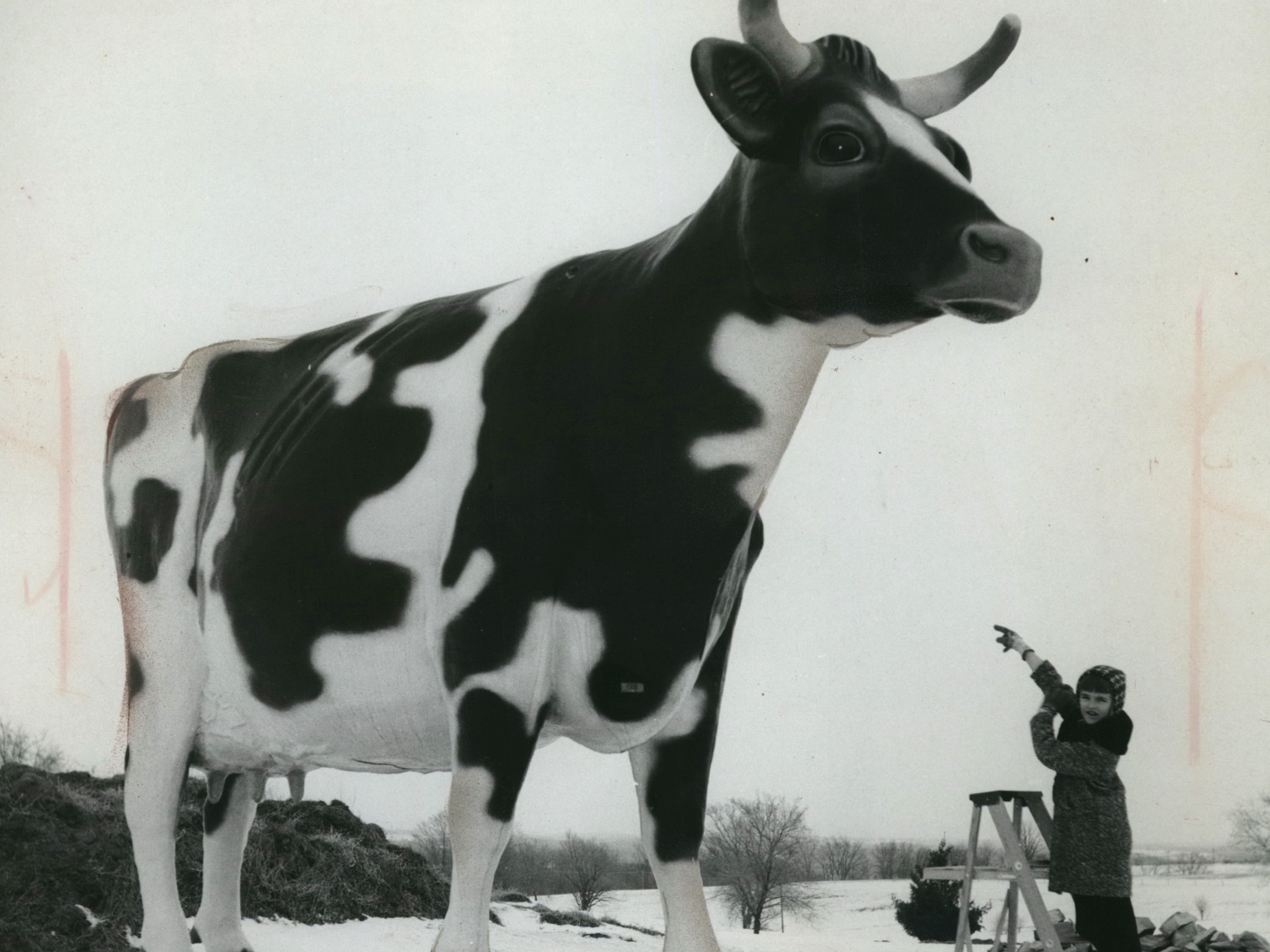 """In 1967: Jody Hartl of Loyal (Clark County) pointed to the world's largest cow, which she named """"Chatty Belle."""" Jody received 100 pounds of butter as a prize in the contest to name the 16-foot  symbol of Wisconsin's dairy industry."""
