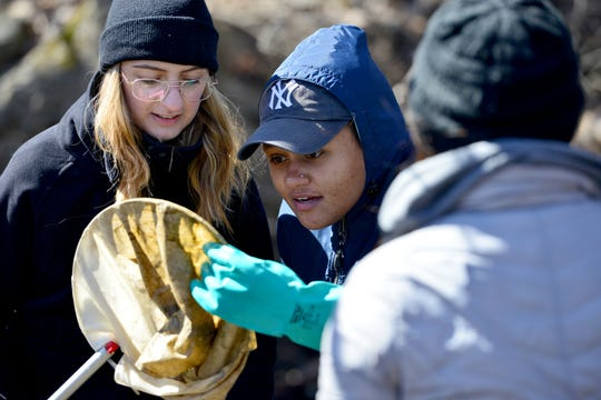 Students in an environmental science class for William Paterson University use nets to catch macroinvertebrates out of a creek in North Haledon on March 26. Their research will be the basis for a project by an artist, to be displayed in the university's galleries next year.