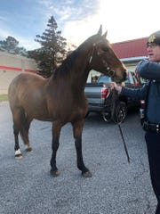 Georgetown Police Officer Derrick Calloway waits for Bailey's owner to show up, after the horse escaped and went for a run down Route 113 on Tuesday morning.