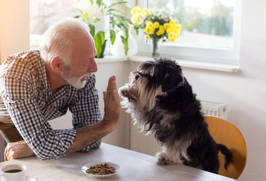 Owning a pet has amazing health benefits for seniors.