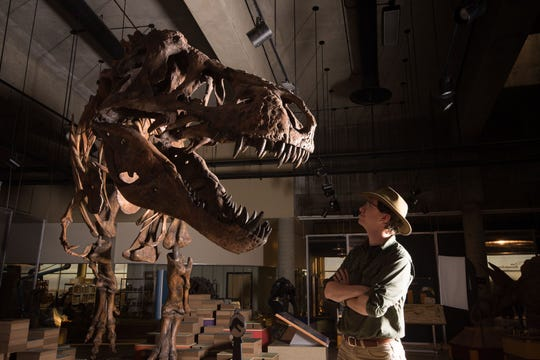 """W. Scott Persons looks at the skeleton of the Tyrannosaurus rex """"Scotty"""" at the T. rex Discovery Centre in Eastend, Canada."""