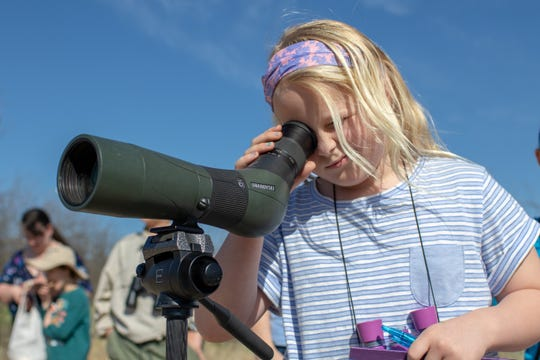 Olivia Martin looks at a Pyrrhuloxia, a relative of the cardinal, through the scope.