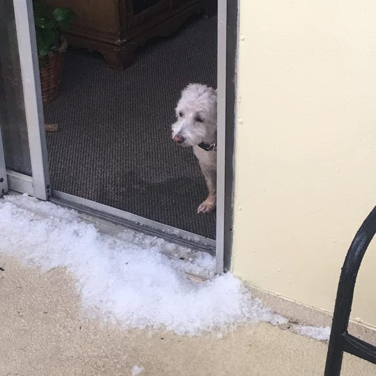 """Satellite Beach resident Kathy Smith's puppy, Piper Chapman, views hail for the first time. Piper """"isn't diggin' it,"""" Smith said in a Facebook post."""