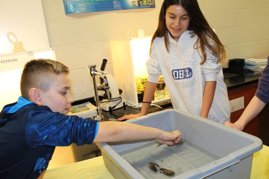 Grade 7 students Brandon Smulski and Nicole Palumbo checking out the oyster toadfish.