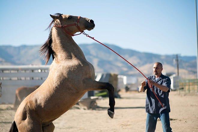 "Matthias Schoenaerts in ""The Mustang."""