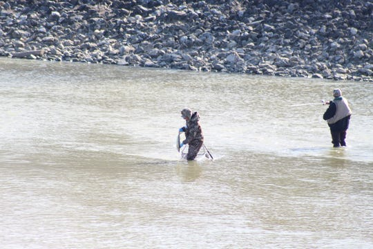 An angler catches a walleye along the Sandusky River near the Fifth Street Bridge on Wednesday morning.