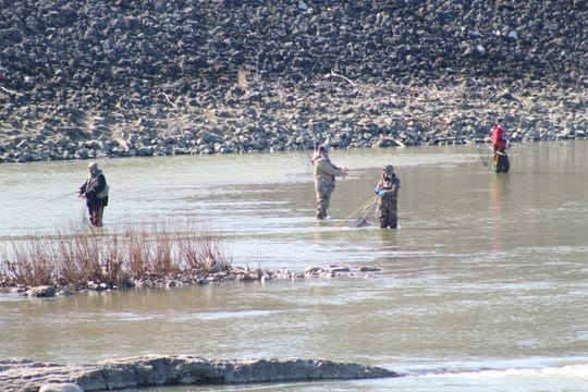 Anglers line the Sandusky River near the Fifth Street Bridge on Wednesday hoping to catch walleye.