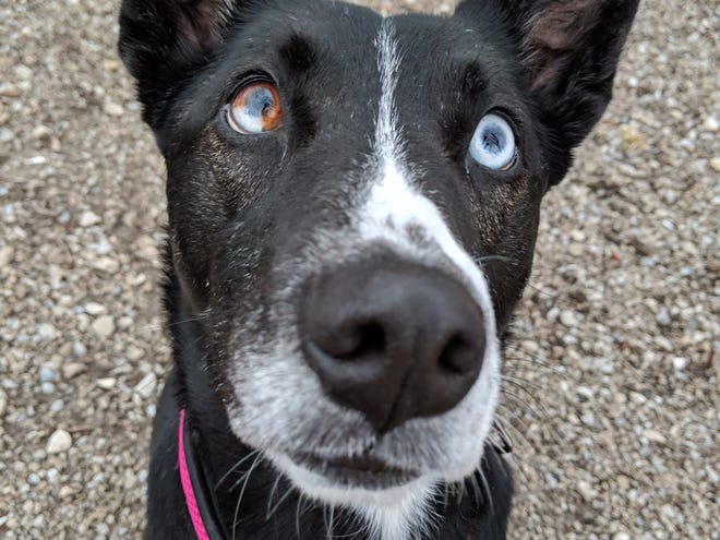 Lady is looking for a new home.