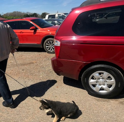 73-year-old man from Greenville County charged after dragging leashed puppy at Jockey Lot
