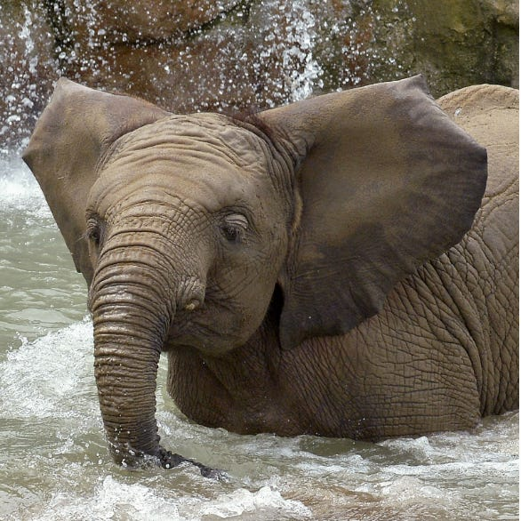 Indianapolis Zoo elephants: What we know about the deaths of Kalina and Nyah