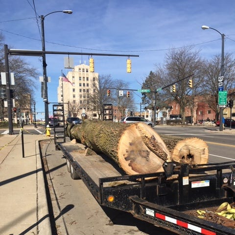 Trees removed from the Richland County Courthouse Lawn Wednesday sit on a trailer.