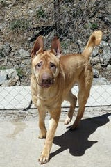 Nico is house/kennel trained, social with kids and other dogs.