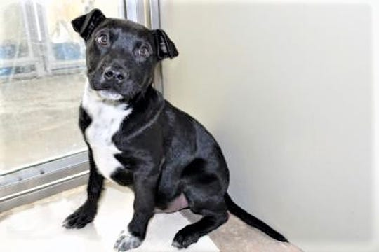 Mongo is from one of the first litter of pups  the shelter received this year.