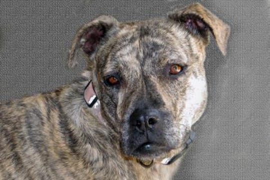 Macey is a healthy, happy-go-lucky 7-year-old spayed female.
