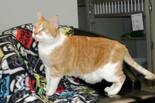 Booger Jack is a neutered 13-year-old male.
