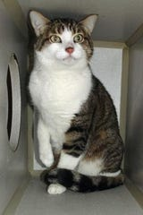 Bella is a 10-year-old spayed female.