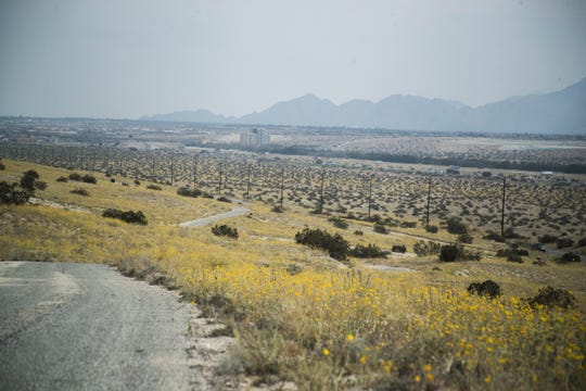 A mixture of desert flowers can be seen on an access road north of the intersection of Varner Road and Date Palm Drive in Cathedral City.