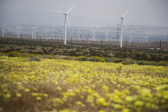 Yellow desert flowers can be seen on Worsley Road near Painted Hills Road in Desert Hot Springs. You can park on Worsley Road and view windmills towards the east.