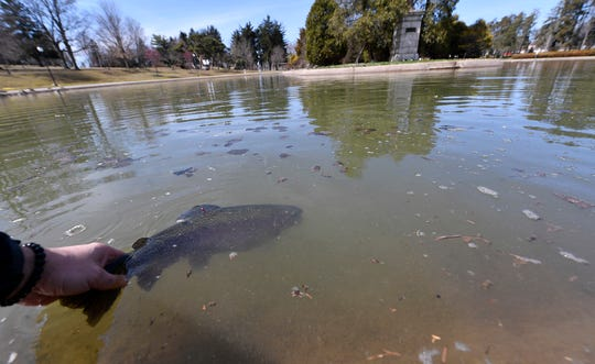 """York City resident Troy """"Muskie"""" Myers stocks 40 tagged trout, including 20 trophy sized lunkers, in Kiwanis Lake for this weekends youth fishing derby, Wednesday, March 27, 2019. In it's 21st year, the Bill Shaffer Memorial Trout Derby brings the experience of trout fishing to inner city children who would otherwise never catch a trout.John A. Pavoncello photo"""