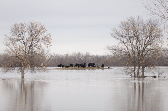 Cheyenne River Sioux Tribe officials have asked residents to voluntarily evacuate before the water level crests on Thursday. But many residents are refusing to evacuate because of concerns for their livestock and other property.