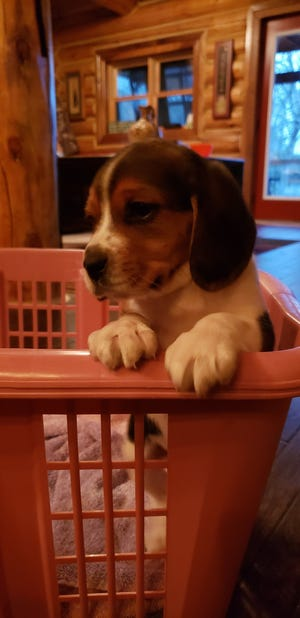 According to a probable cause statement, a witness called authorities on Monday to report that someone had dumped a small puppy in the ditch just southeast of the Marshfield city limits.