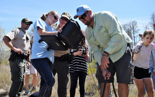 Participants and staff scope a gopher tortoise burrow to document species on iNaturalist as part of an FWC bioblitz.