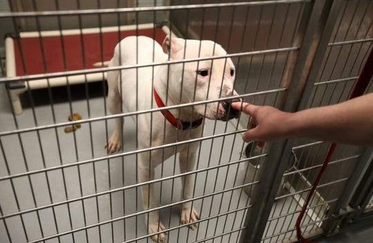 A worker greets a dog at the Yonkers Animal Shelter March 27, 2019.