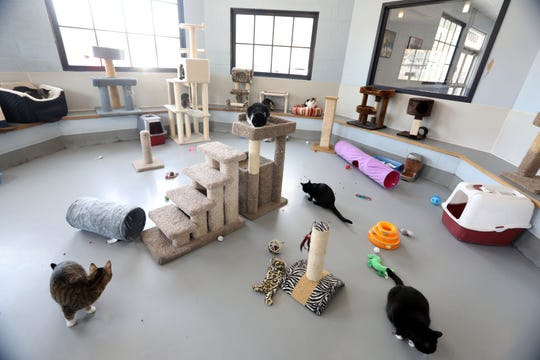 Cats in the community room at the Yonkers Animal Shelter March 27, 2019. They currently have 60 cats.