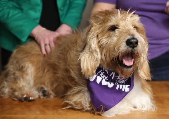 Ann Marie Gaudio, president of the Hudson Valley Humane Society brought her dog, Maxwell, to the Center for Safety & Change, in New City March 27, 2019. The two organizations have formed an alliance to help the center's clients who have pets.