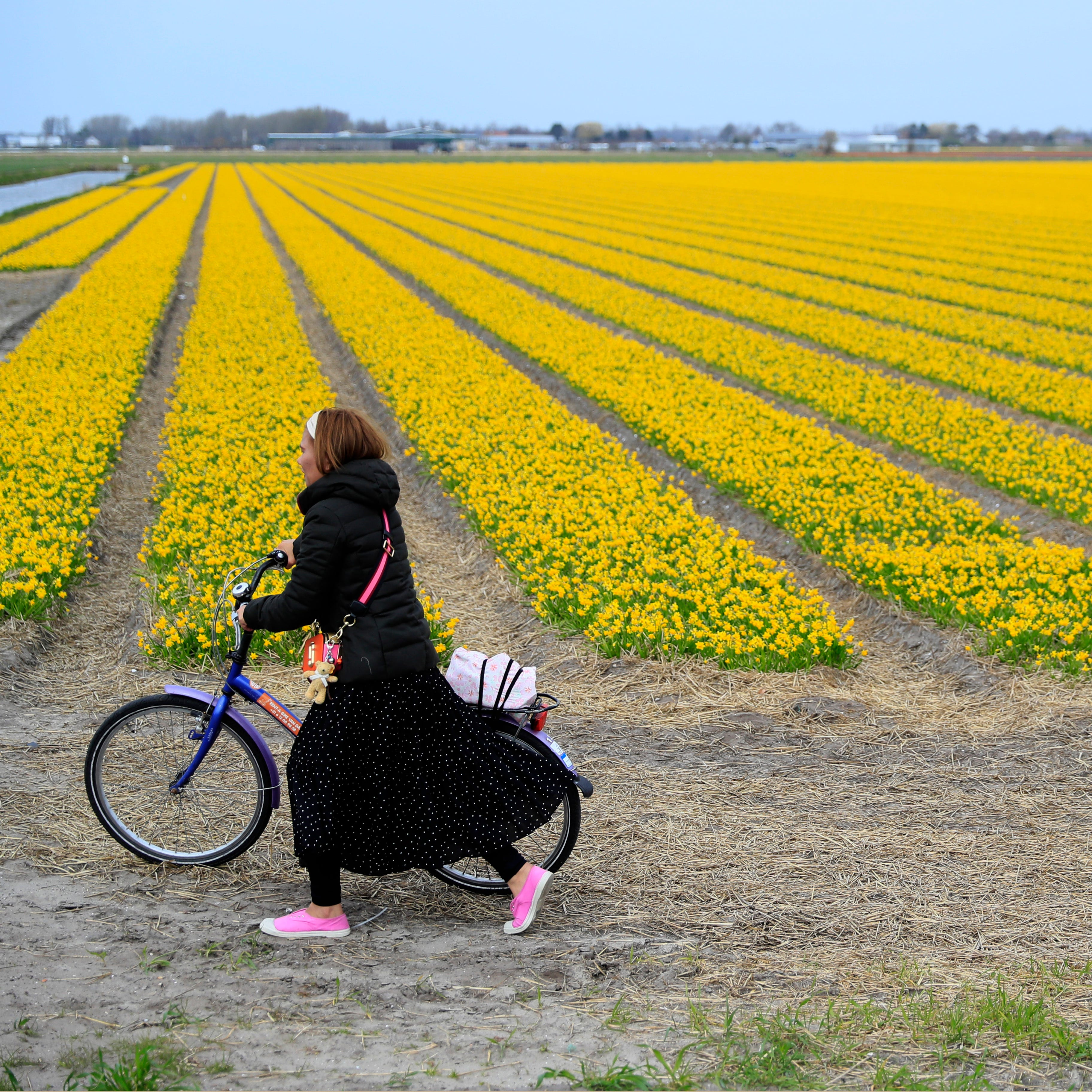 A tourist pushes her bicycle after taking pictures in a flower bulb field in Lisse, Netherlands on March 27, 2019.