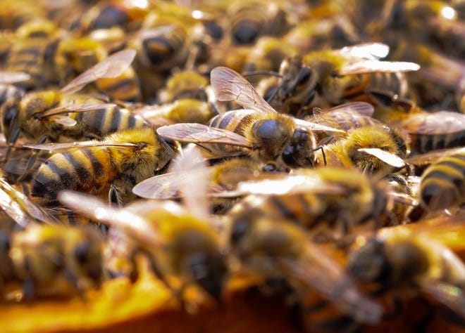 A Las Cruces man and his two dogs were attacked by a swarm of bees Saturday, May 18, at St. JohnMobile Home Park.
