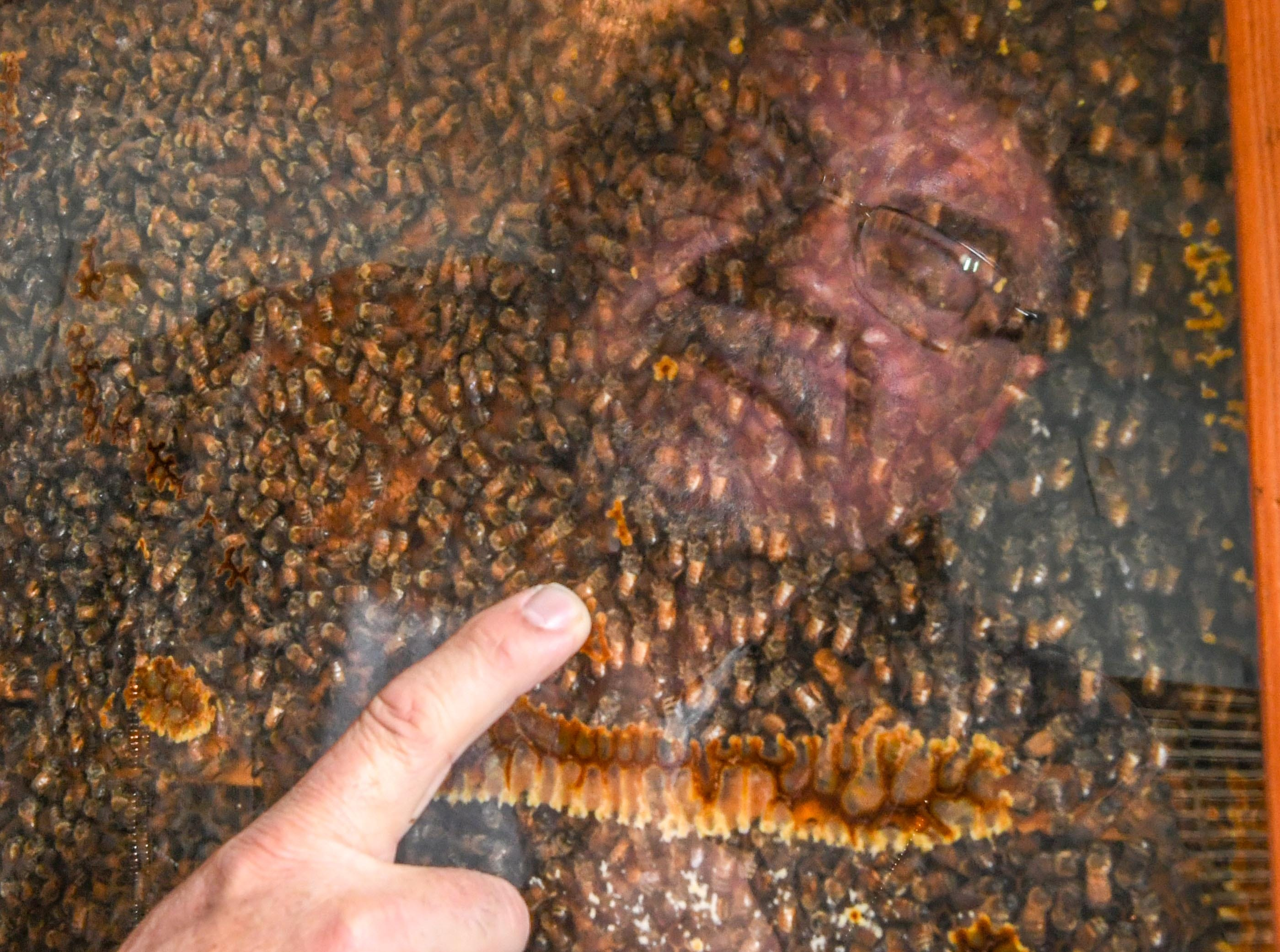 Kerry Owen, owner of Bee Well Honey in Pickens shows a case of enclosed bees used for educational purposes at his main office Thursday.