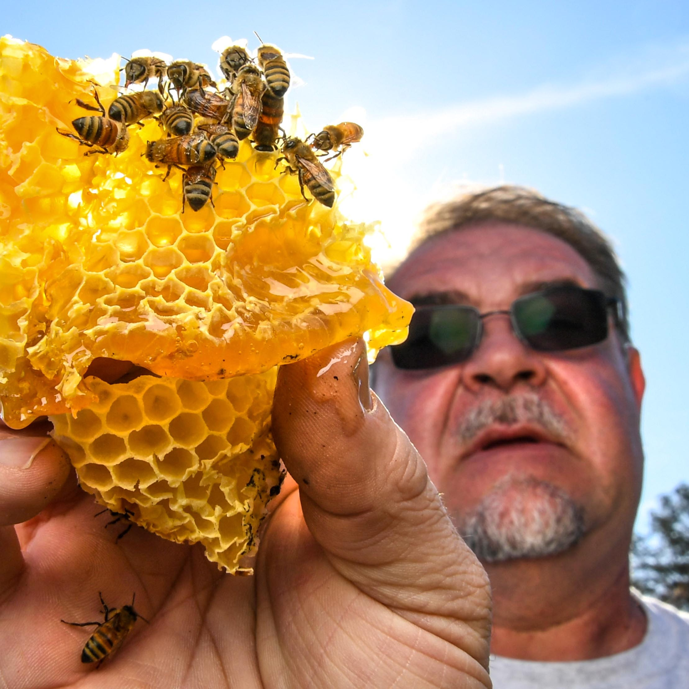 Here's why Pickens County beekeeper brought 46 million bees into the Upstate SC