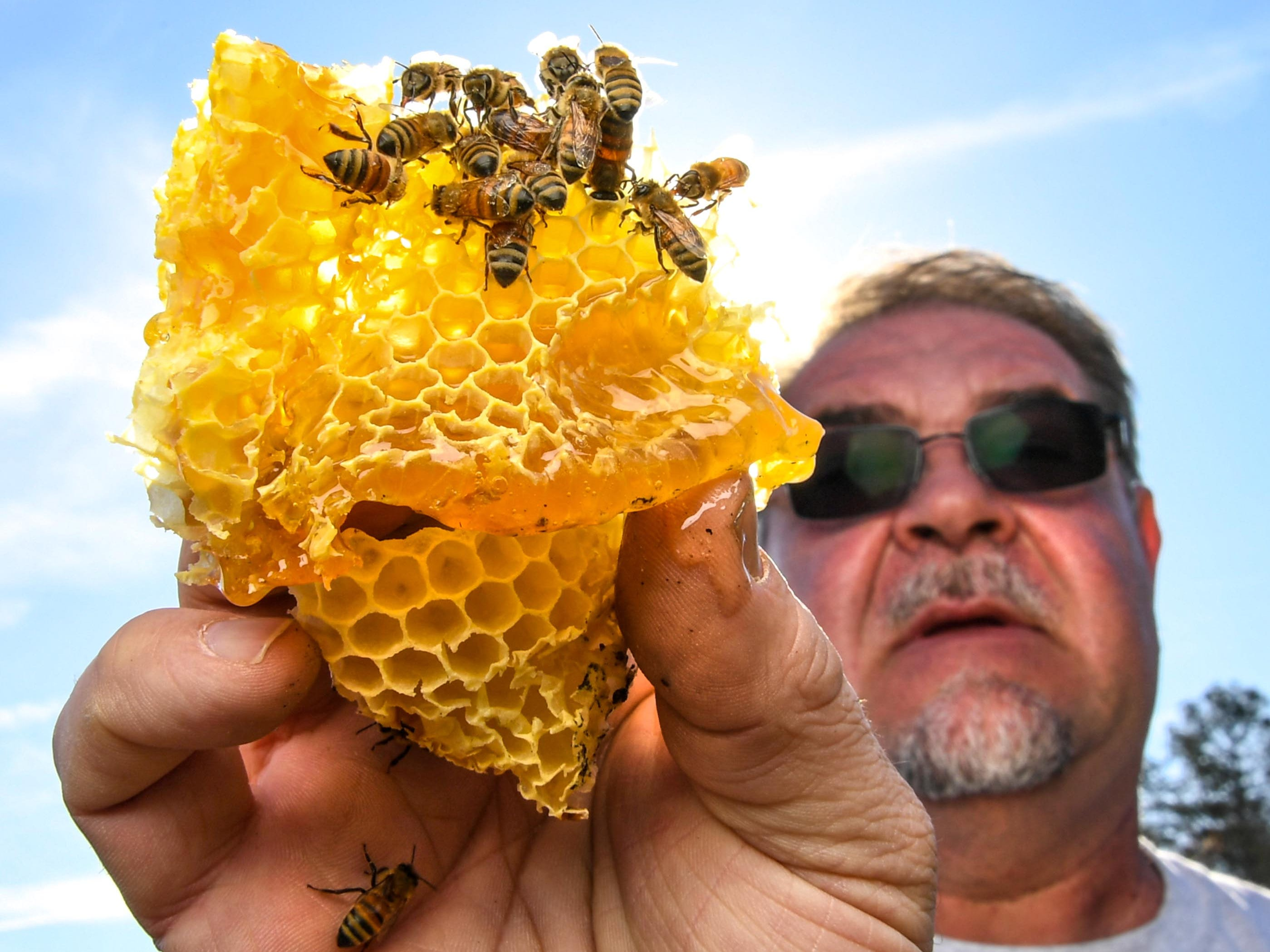 Kerry Owen, owner of Bee Well Honey in Pickens holds a honeycomb with bees at the Kaplan farm in Pickens Thursday.
