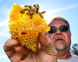 Bee Well Honey Bee Supply brought 23 million honey bees into Pickens on a tractor-trailer for the second time this spring, and more are on the way.