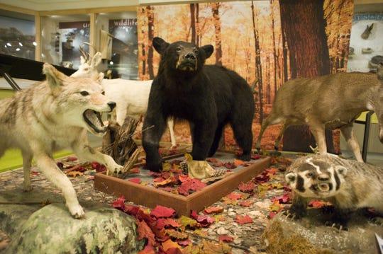 Wildlife on exhibit at Kingman Museum.