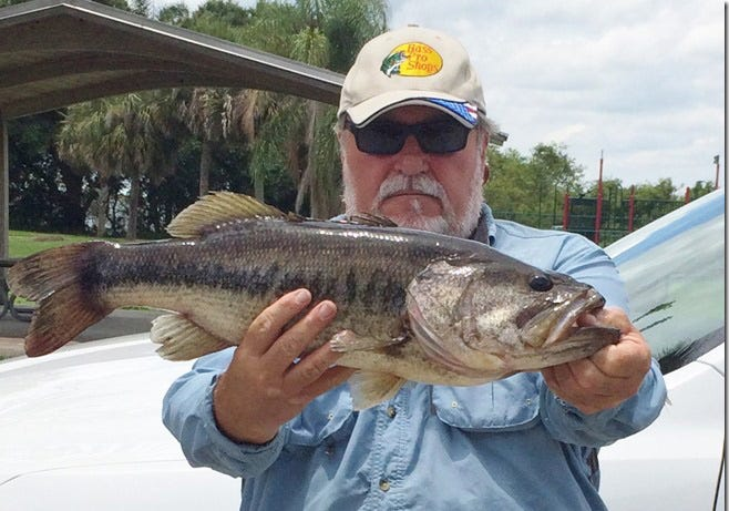 Alex Montminy of Cocoa, winner of a Mister Flyrod title for 2018 tournaments in the Florida Flyrod Club, caught this bass on a popping bug in one of the club's monthly tournaments. It is Montminy's second Mister Flyrod in the 48-member club now in its 46th year.