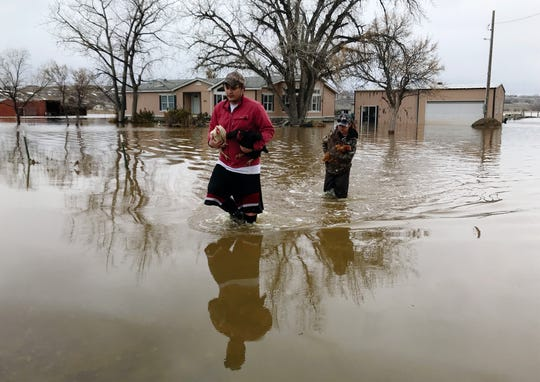 Isaiah Burk and Tiana Feller carry chickens to higher ground as flood water surrounds several homes in Gibson Flats, Thursday afternoon.
