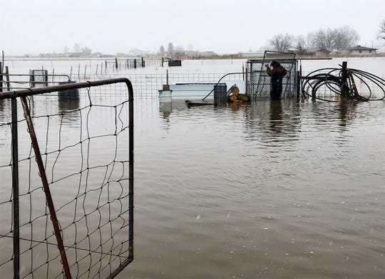 Ron Erpelding collects fence panels from a flooded pasture to build a makeshift chicken pen as flooding continues along Gibson Flats Road.
