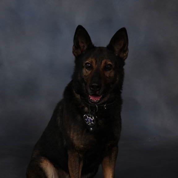 Beloved Passaic County Sheriff's Office K-9 dies while on the job