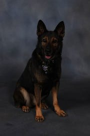 K-9 Leo died unexpectedly Wednesday while on duty. He served as a narcotics and patrol K-9 for seven years in the Passaic County Sheriff's Office.