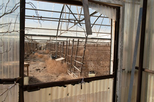 The dilapidated remnants of Burgett Geothermal Greenhouses loom near Cyrq Energy's Lightning Dock power plant. Rose farmer Dale Burgett, deceased, was the first to tap the geothermal water of the Animas Valley on a commercial scale.