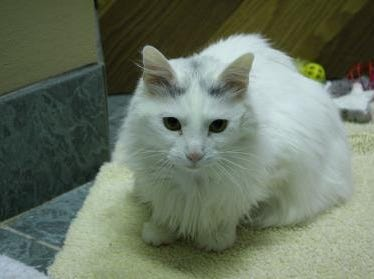 Margorie, 4, is excited for a family of her own. She is spayed.