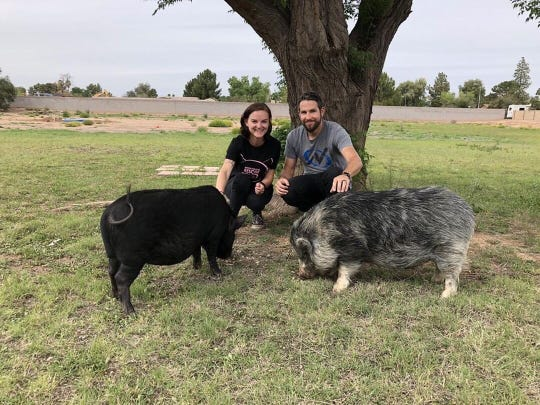 Megan Howell and Phil Walker crouch for a photo with their new pet pigs Solange and Coppachino.