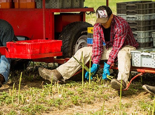 """Revised guest worker bill would create a path to legalization through a """"Blue Card"""" for agriculture workers currently working with falsified documentation."""