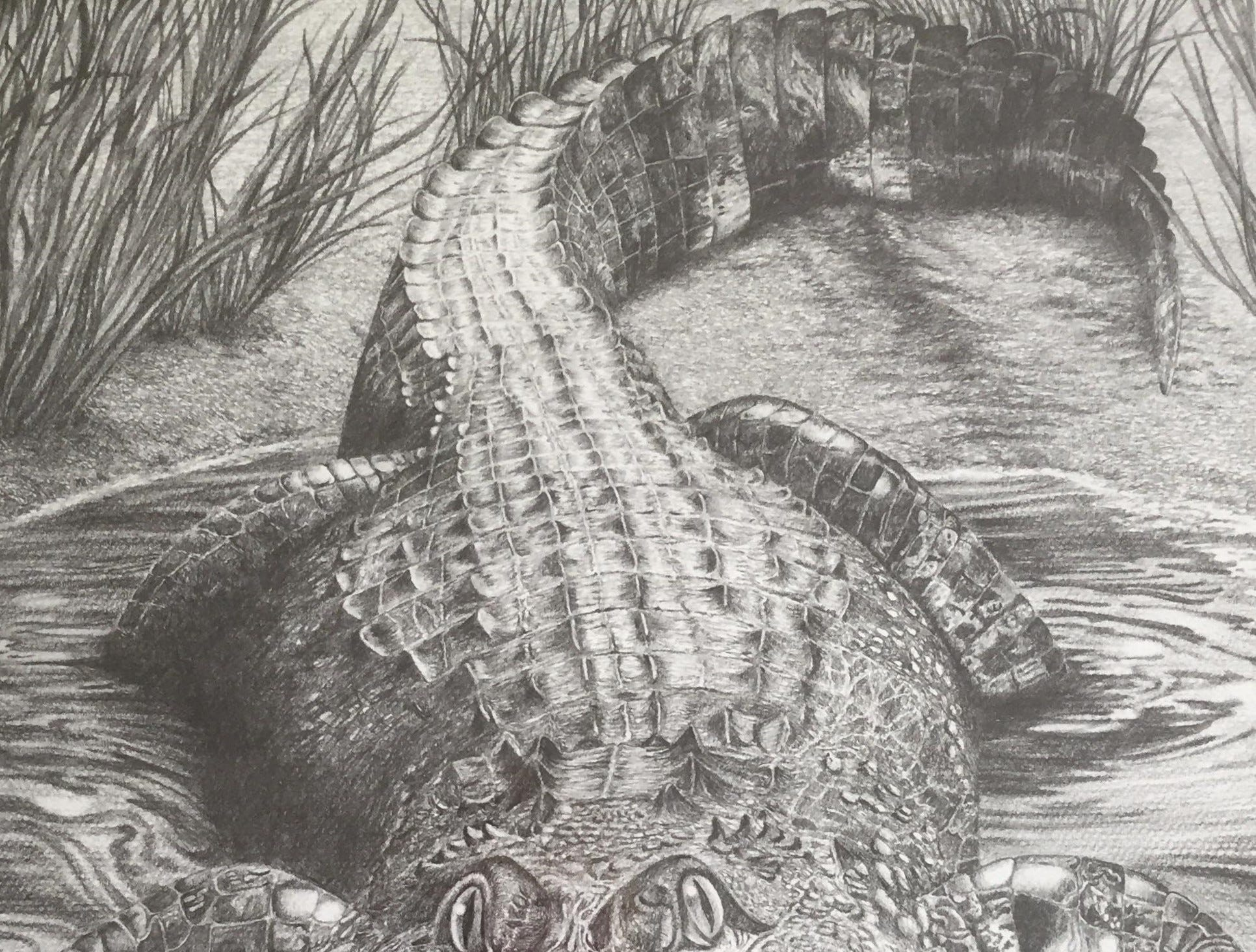 This alligator hangs in former Community Press employee Jan Chesney's Florida home.